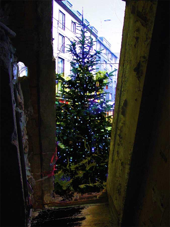 weihnachtsbaum_natur non-pur_adventszeit nordstraße düsseldorf
