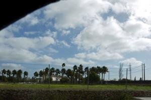 P1340765_vom Winde verweht sind Palmen und Wolken