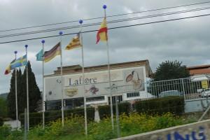 P1340899_zwischen Valldemossa und Palma_Lafiore