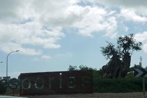 P1340903_Esporles_Kreisel mit uraltem Ölbaum